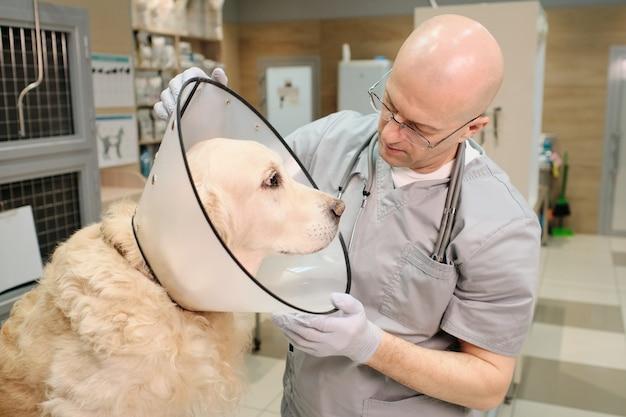 Medico maturo in uniforme che esamina il cane durante la procedura medica presso la clinica veterinaria