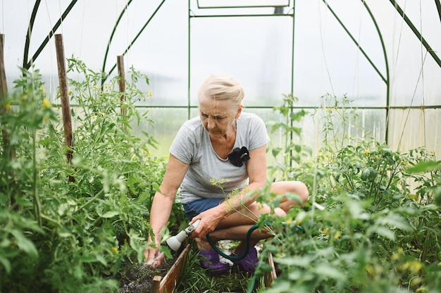 Donna anziana matura che innaffia le piante con il tubo flessibile dell'acqua. concetto di agricoltura, giardinaggio, agricoltura, vecchiaia e persone