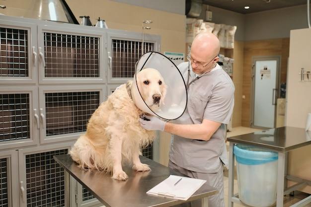 Veterinario maturo che esamina il cane di razza con lo stetoscopio alla clinica veterinaria