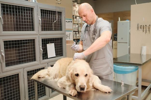 Veterinario maturo che fa una vaccinazione al cane domestico nella clinica veterinaria