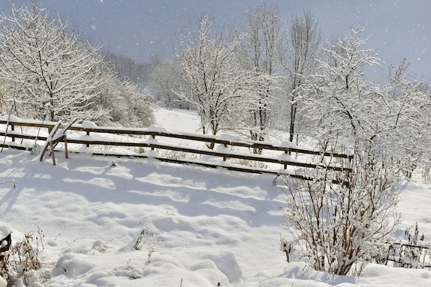 Prato vicino a una staccionata in legno e alberi coperti di neve sotto i fiocchi di neve