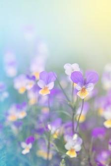Pianta fiorita di prato su uno sfondo sfocato di blu e giallo