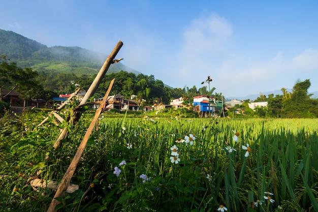 Prato in vietnam