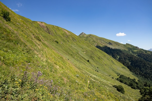 Prati e campi. paesaggio di montagna con erba verde e cielo nelle giornate di sole. il momento e la stagione perfetti per l'escursionismo e il trekking