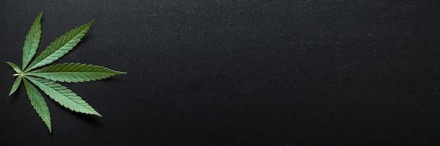 Foglie di cannabis medica e concetto di olio di cbd, foglie di canapa vista dall'alto su sfondo nero
