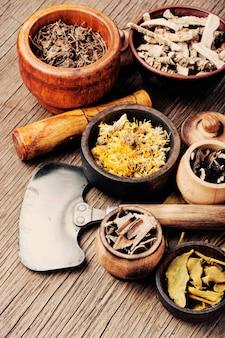 Erbe medicinali e curative