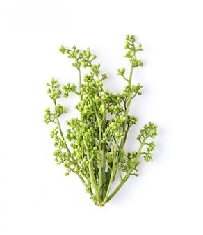 Fiore di neem medicinale