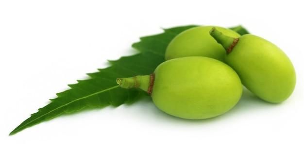 Frutti medicinali del neem con foglia verde