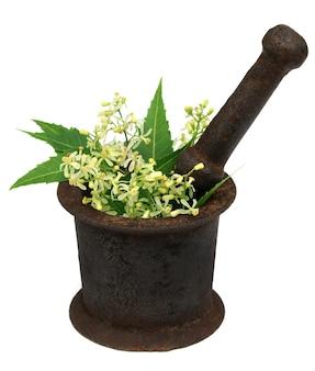 Foglie e fiori di neem medicinali su un mortaio vintage