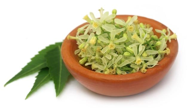 Foglie e fiori medicinali di neem su sfondo bianco