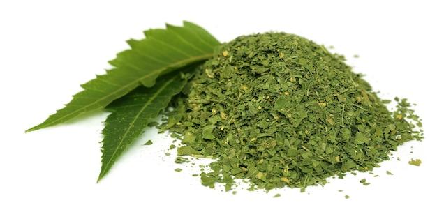 Foglie medicinali di neem con polvere secca su sfondo bianco