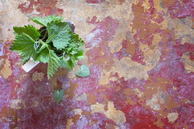 Pianta medicinale foglie fresche di ortiche, fuoco selettivo. foglia di ortica fresca sul tavolo della cucina un fondo rustico. vista dall'alto, copia dello spazio.