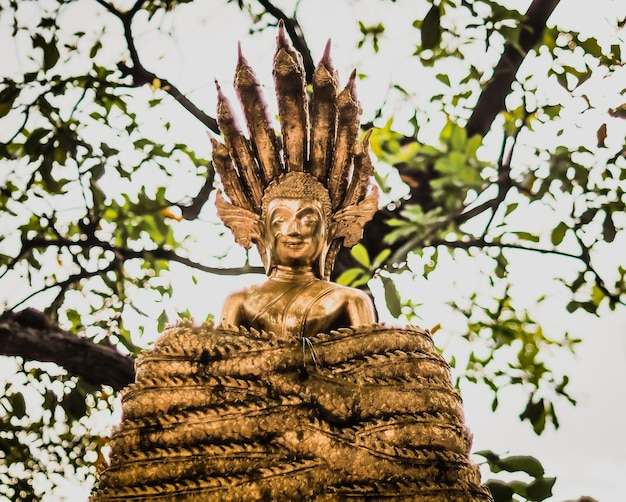 Meditando la statua del buddha sotto l'albero