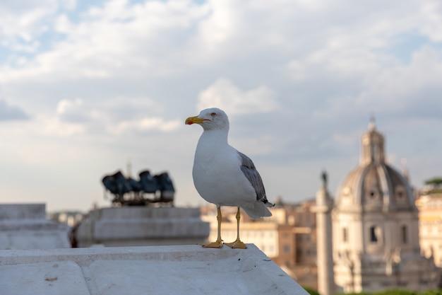 Gabbiano mediterraneo posti a sedere sul tetto del vittoriano sullo sfondo della vista di roma a giornata di sole