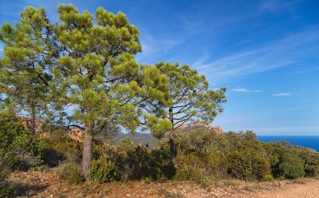 Prees di pini mediterranei nelle montagne dell'esterel massif de l'esterel saint raphael provence france