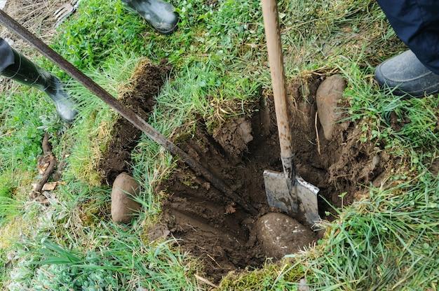 Gli uomini stanno scavando una fossa per piantare un albero