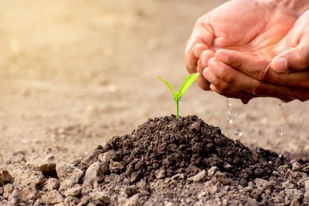 La mano degli uomini sta piantando le piantine nel terreno.