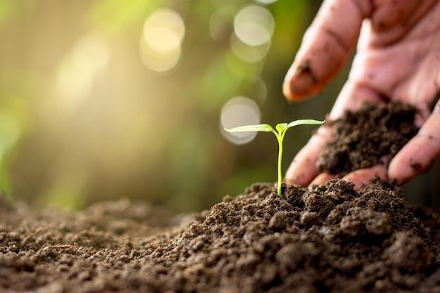 La mano degli uomini sta piantando piantine nel terreno.