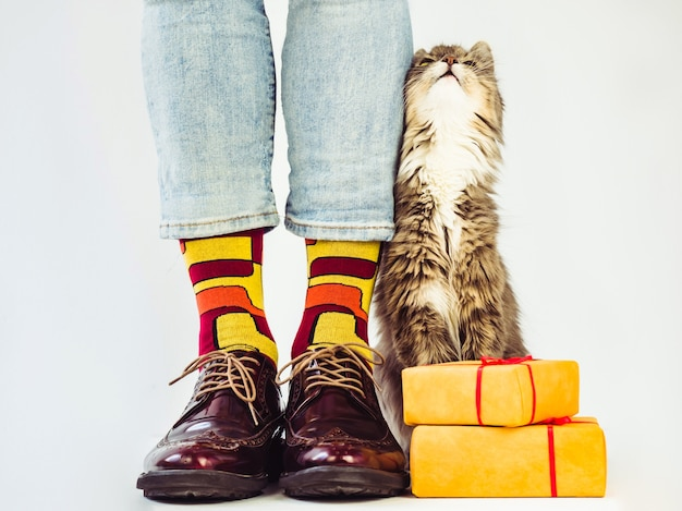 Gambe da uomo, scarpe eleganti, calzini colorati con un motivo e un gattino grigio e soffice.