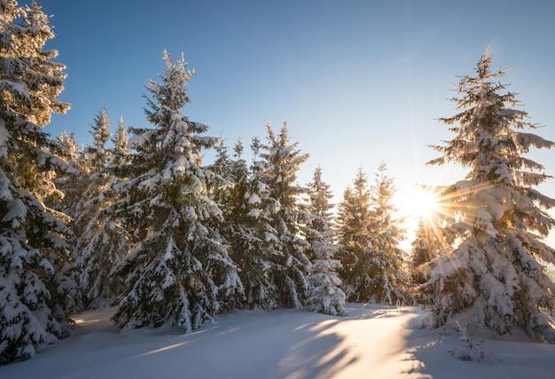 Paesaggio affascinante di una fitta foresta di conifere che cresce su colline innevate su uno sfondo di cielo azzurro e nuvole bianche in una soleggiata giornata invernale gelida. concetto di stazione sciistica e trekking