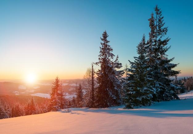 Affascinante paesaggio di una fitta foresta di conifere che cresce su colline innevate su uno sfondo di cielo blu