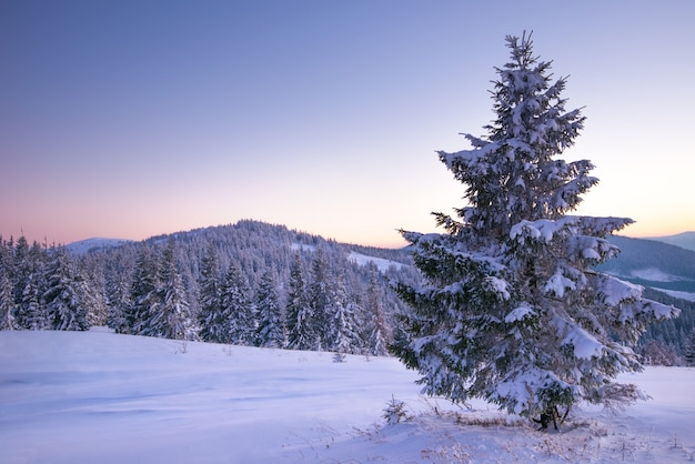 Affascinante paesaggio di una fitta foresta di conifere che cresce sulle colline innevate contro un cielo blu e nuvole bianche in una soleggiata gelida giornata invernale