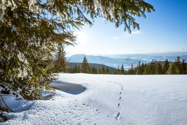 Affascinante paesaggio di una fitta foresta di conifere che cresce su colline innevate contro una superficie di cielo blu e nuvole bianche in una soleggiata gelida giornata invernale
