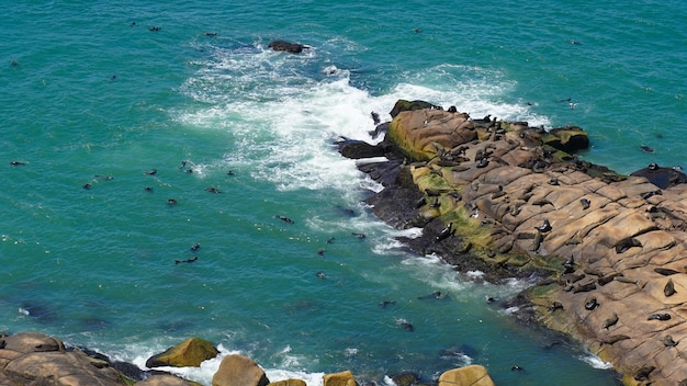 Vista affascinante della costa dell'uruguay con i leoni marini che riposano sulle rocce