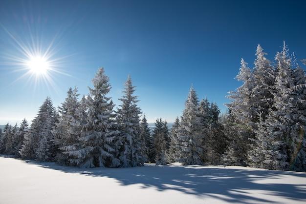 Affascinante paesaggio invernale con un pendio innevato e alberi che crescono contro un cielo blu e nuvole bianche in una soleggiata giornata invernale gelida