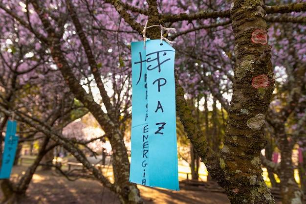 Messaggio sulla festa da cerejeira brasiliana