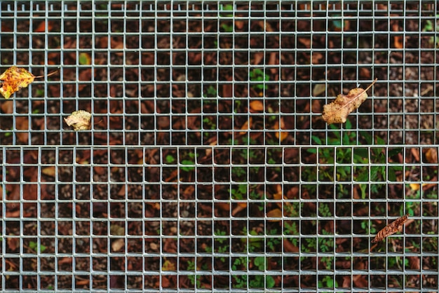 Reticolo metallico per il deflusso dell'acqua. foglie di autunno al reticolo stradale. backround astratto con foglie cadute.