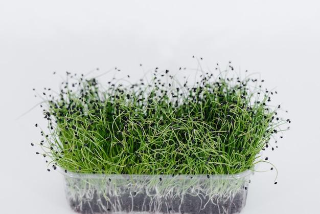 Primo piano dei germogli di micro-cipolla verde su un muro bianco in una pentola con terra. cibo e stile di vita sani.