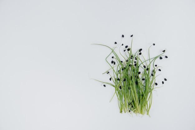 Primo piano micro-germogli verdi su un muro bianco con spazio libero. cibo e stile di vita sani.
