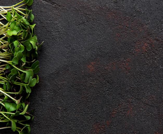 Micro green su una superficie di cemento nero