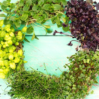 Micro verdi di ravanello, cipolla, girasole e basilico su un vecchio tavolo in legno vintage