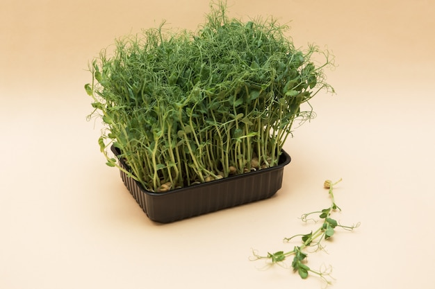 Germogli di piselli micro verdi