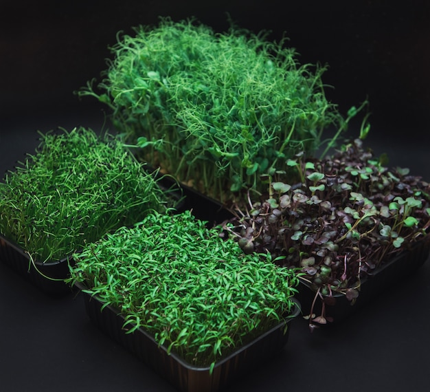 Germogli di micro verdi