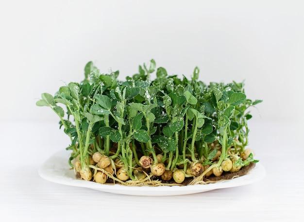 Sfondo fogliame microgreen. foglia di pisello. germogliare le verdure germinate da semi di piante biologiche di alta qualità sul tappetino di lino