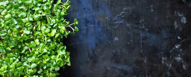 Microgreens contenitore insalata vegetariana crudo mangiare senape erbe basilico fresco ravanello vegan