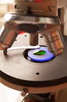 Vetro del microscopio con liquido per la ricerca in laboratorio