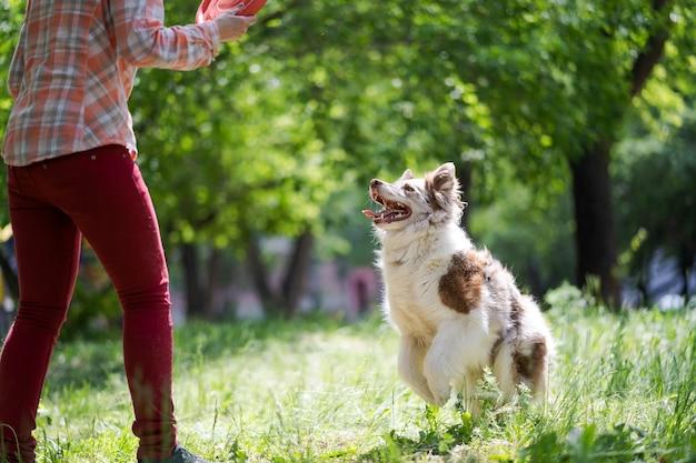 Una donna di mezza età sta giocando con il suo cane border collie