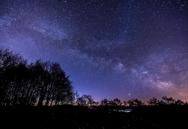 La via lattea sopra la foresta di notte