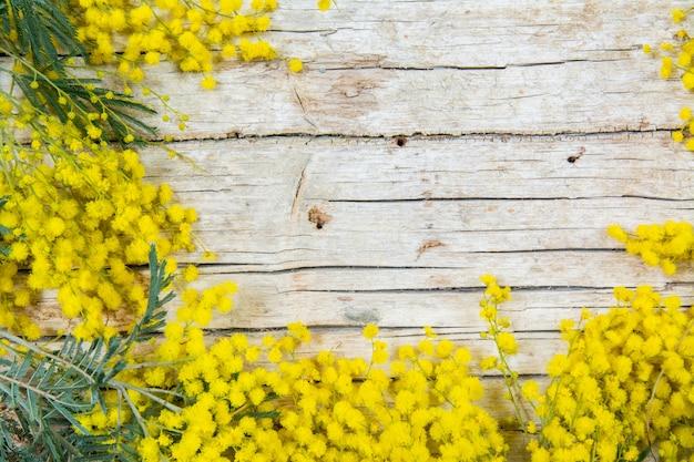 Fiori di mimosa su fondo di legno. 8 marzo, simbolo del giorno delle donne e primavera.