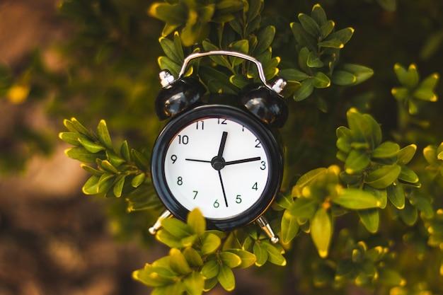 Mini sveglia nera sul cespuglio nel fogliame verde in natura. concetto di tempo. immagine astratta.