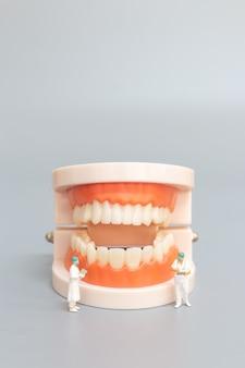 Persone in miniatura: dentista che ripara denti umani con gengive e smalto, concetto di salute e medicina
