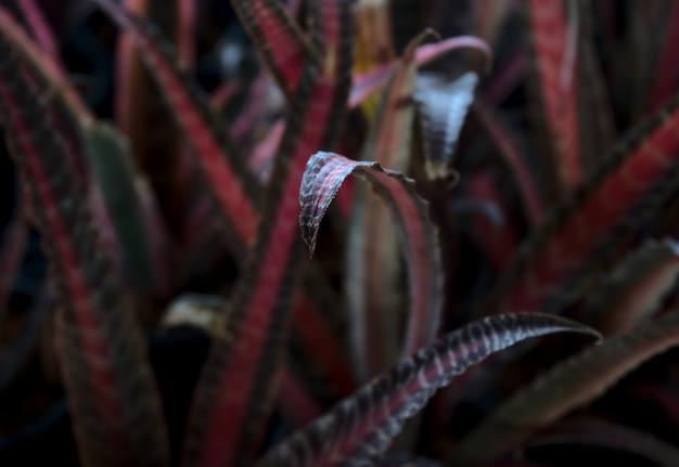 Fondo naturale minimo di struttura dell'estratto del fogliame della foglia della pianta da appartamento del giardino naturale bromeliaceae