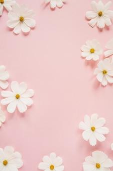 Concetto in stile minimale. fiori di camomilla margherita bianca su rosa pallido. stile di vita creativo, estate, concetto di primavera