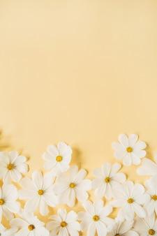 Concetto in stile minimale. fiori di camomilla margherita bianca su giallo pallido