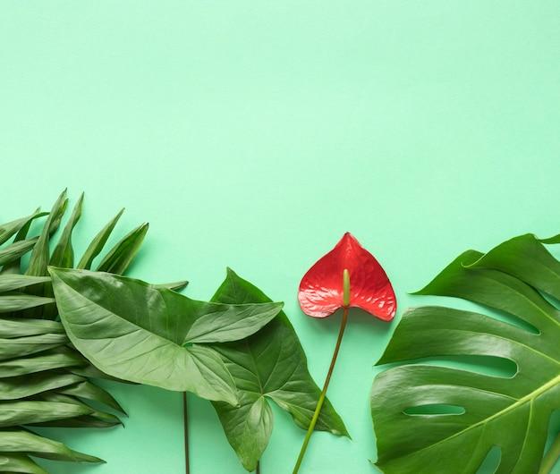 Assortimento minimo di piante tropicali