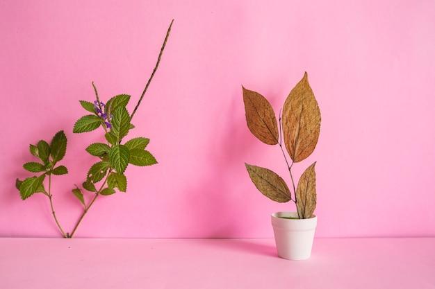 Idea di concetto minimalista. foglie verdi e secche su un vaso bianco su sfondo rosa